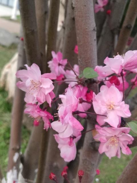 滇之春_图1-2