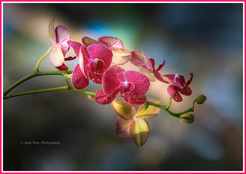 纽约植物园兰花展_图1-30