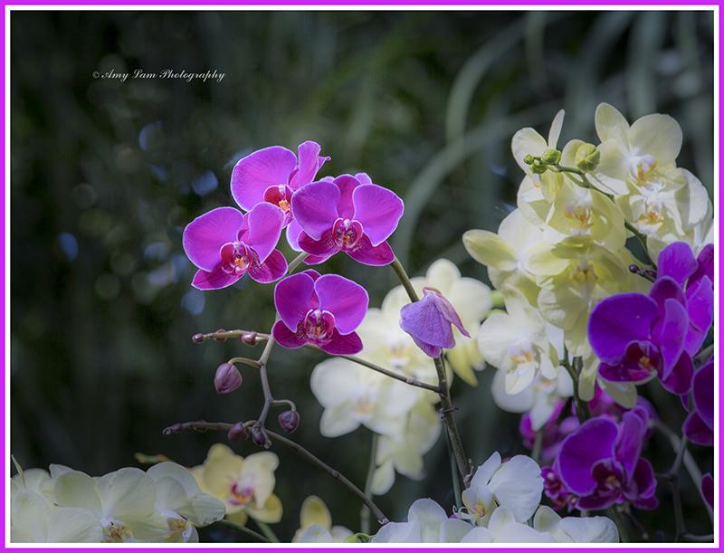 纽约植物园兰花展_图1-31