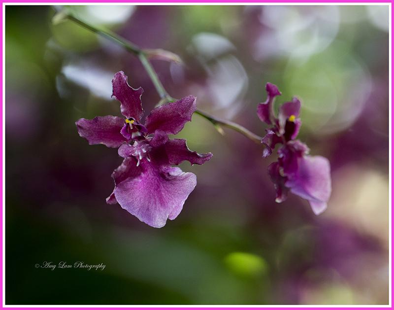 纽约植物园兰花展_图1-25