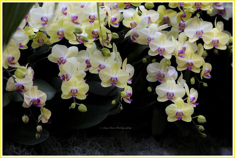 纽约植物园兰花展_图1-6