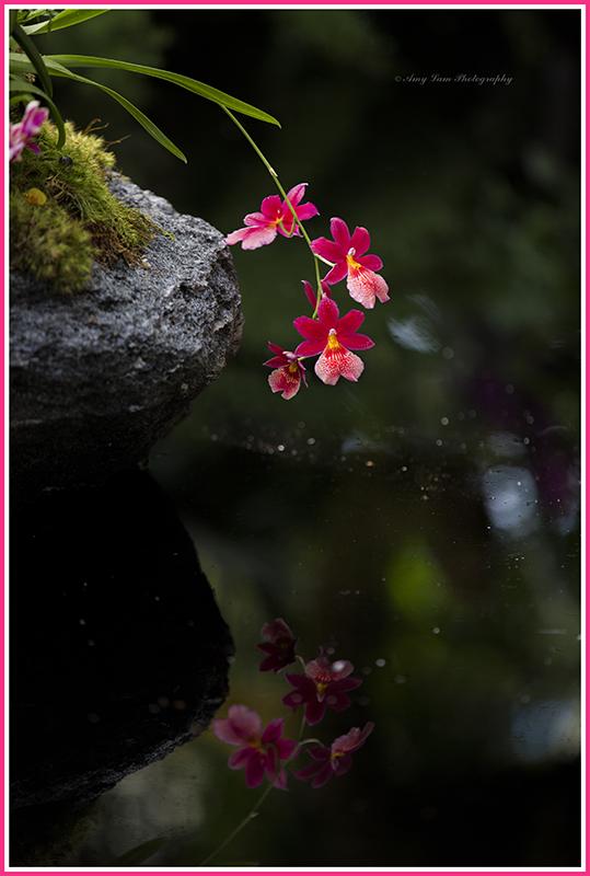 纽约植物园兰花展_图1-7
