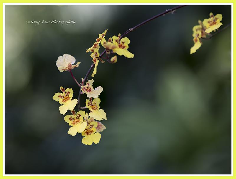 纽约植物园兰花展_图1-14