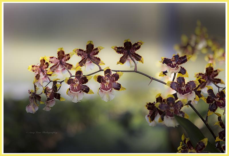 纽约植物园兰花展_图1-16