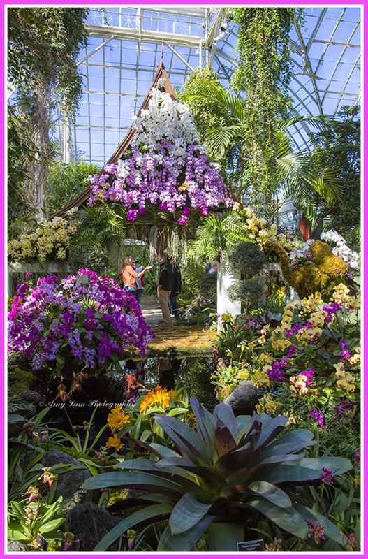 纽约植物园兰花展_图1-4