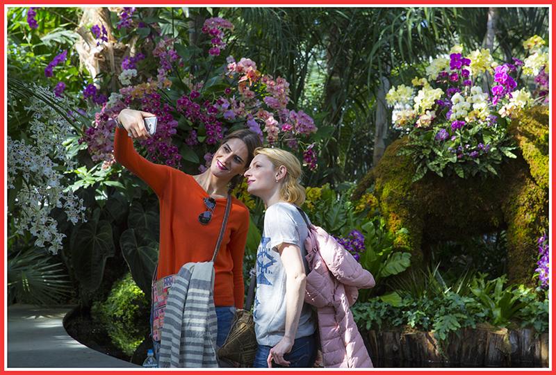 纽约植物园兰花展_图1-5