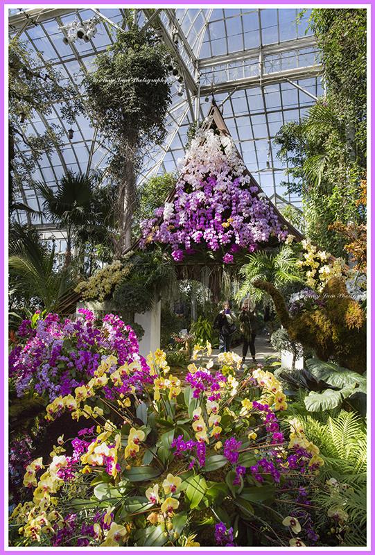 纽约植物园兰花展_图1-1