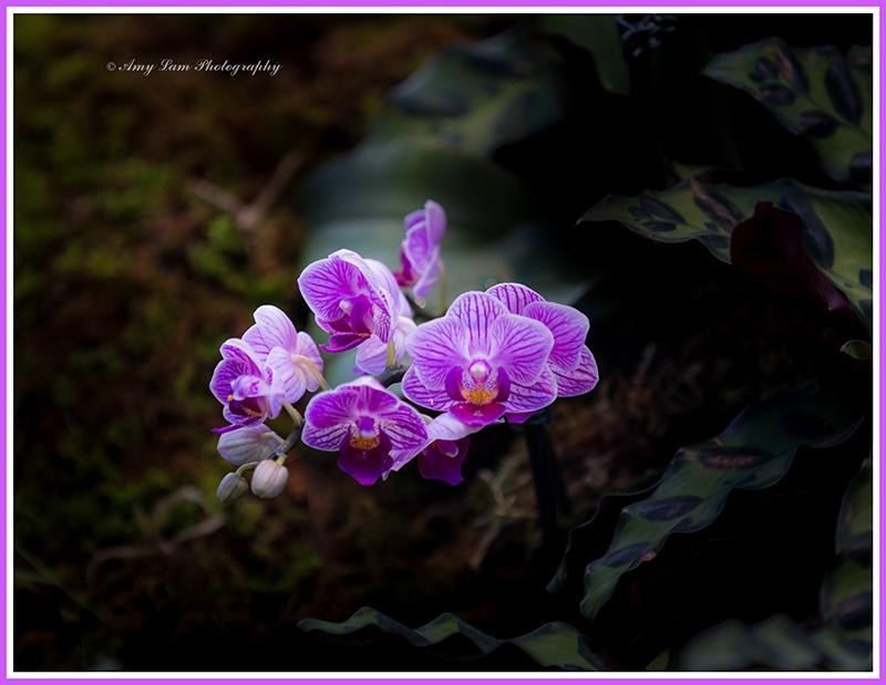 纽约植物园兰花展_图1-38
