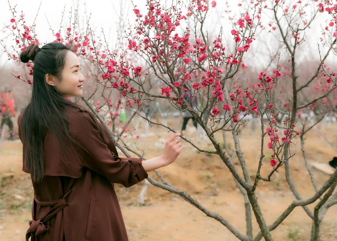 沂水雪山梅园走来一群赏梅踏春的沂蒙女孩 摄影人和女孩们成为梅园一道亮丽的风景线 ..._图1-27