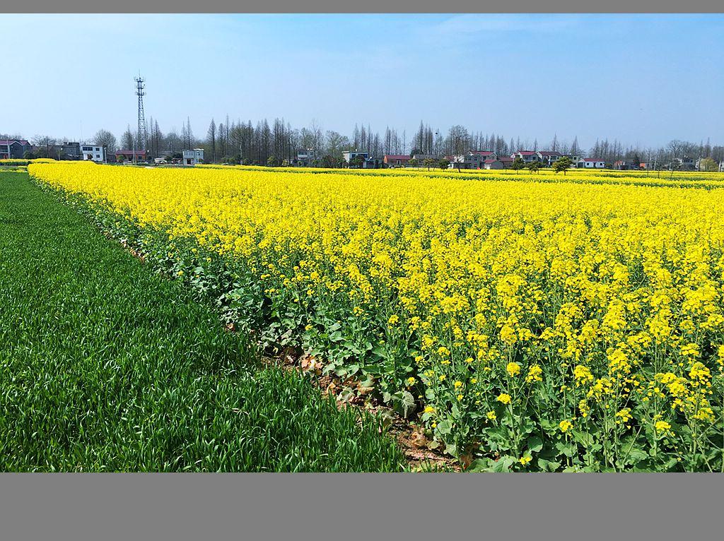 江南乡村的春天_图1-2