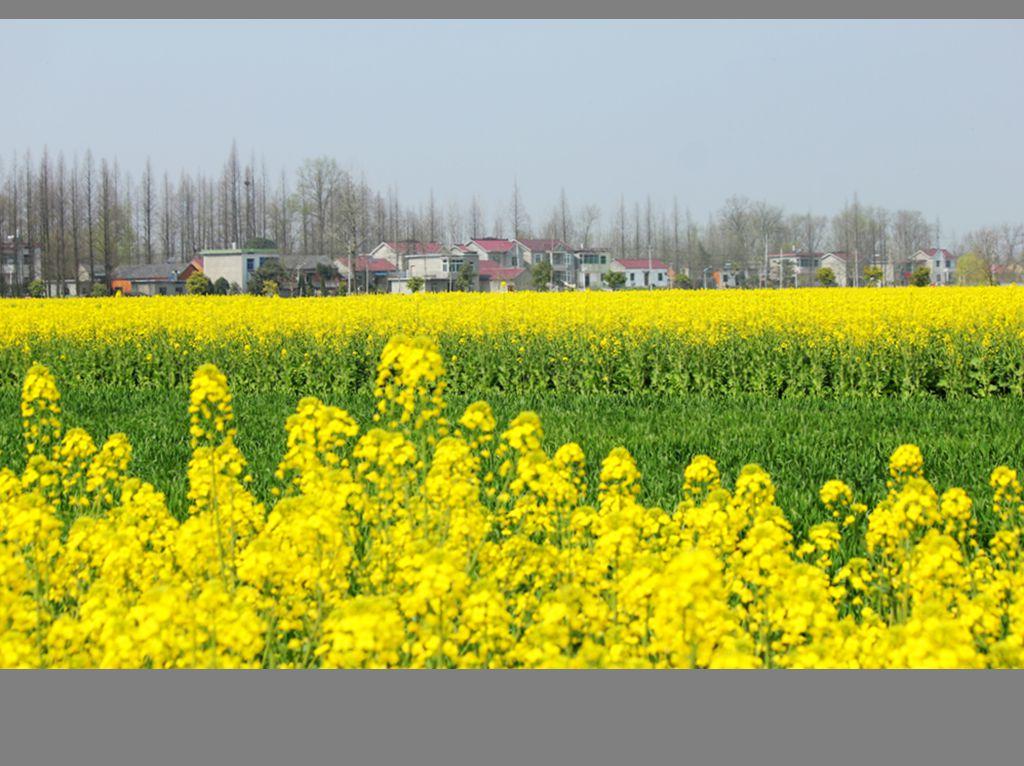 江南乡村的春天_图1-8