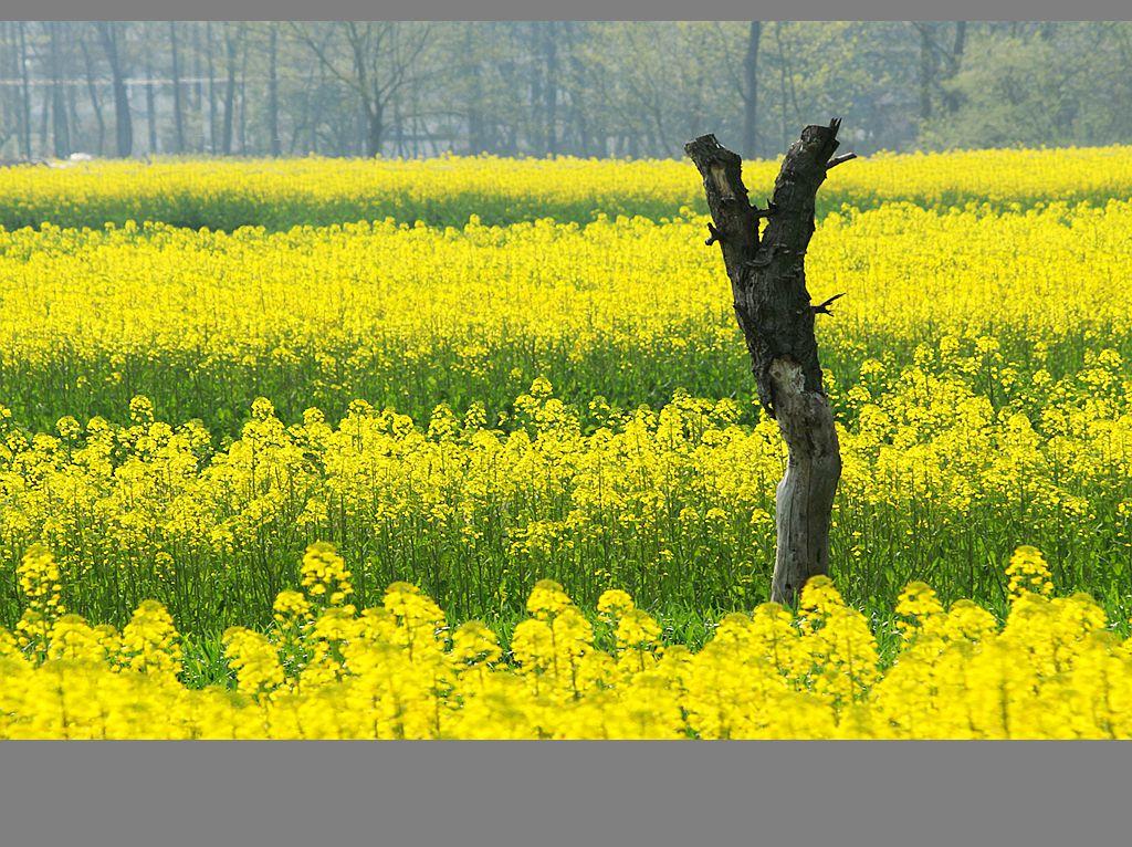 江南乡村的春天_图1-6