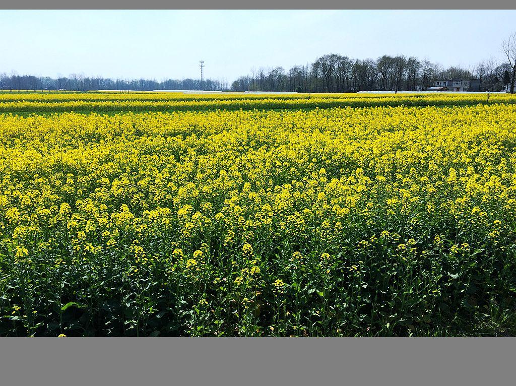 江南乡村的春天_图1-7