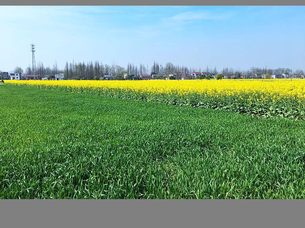 江南乡村的春天_图1-9