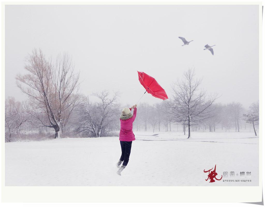 【风】飞雪迎春_图1-6