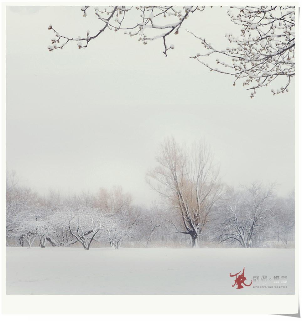 【风】飞雪迎春_图1-4