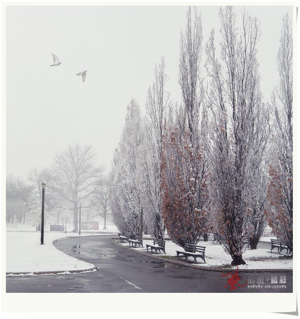 【风】飞雪迎春_图1-1