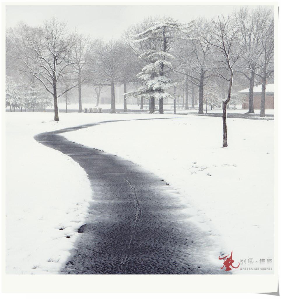 【风】飞雪迎春_图1-5