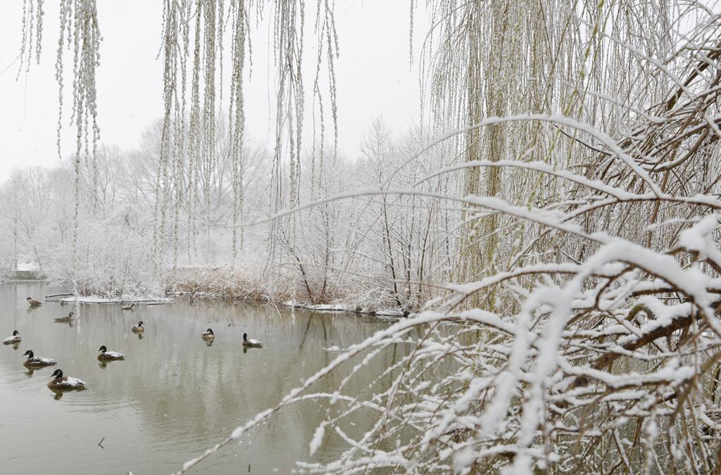 春季水暖鸭先知