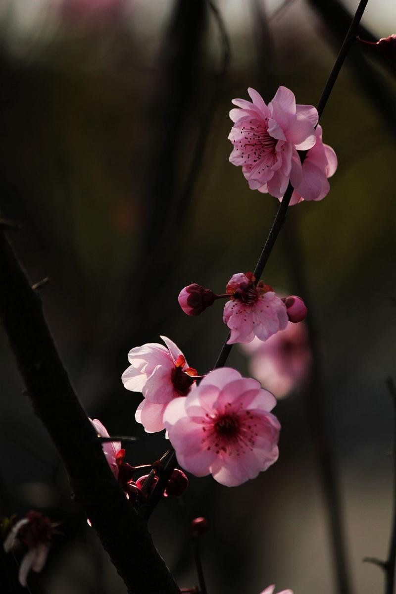山花烂漫时,梅在丛中笑_图1-3