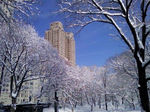 高娓娓:一下雪,纽约就美成了天堂_图1-3