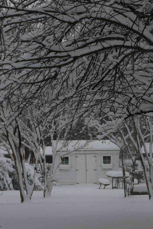 高娓娓:一下雪,纽约就美成了天堂_图1-8