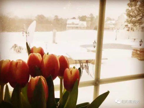 高娓娓:一下雪,纽约就美成了天堂_图1-9