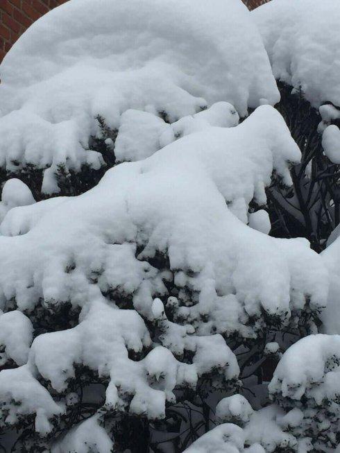 高娓娓:一下雪,纽约就美成了天堂_图1-11