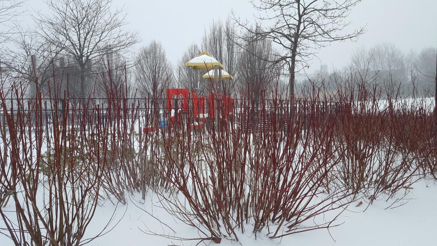 【田螺摄影】暴风雪里我捉到像诗―样的画面_图1-34