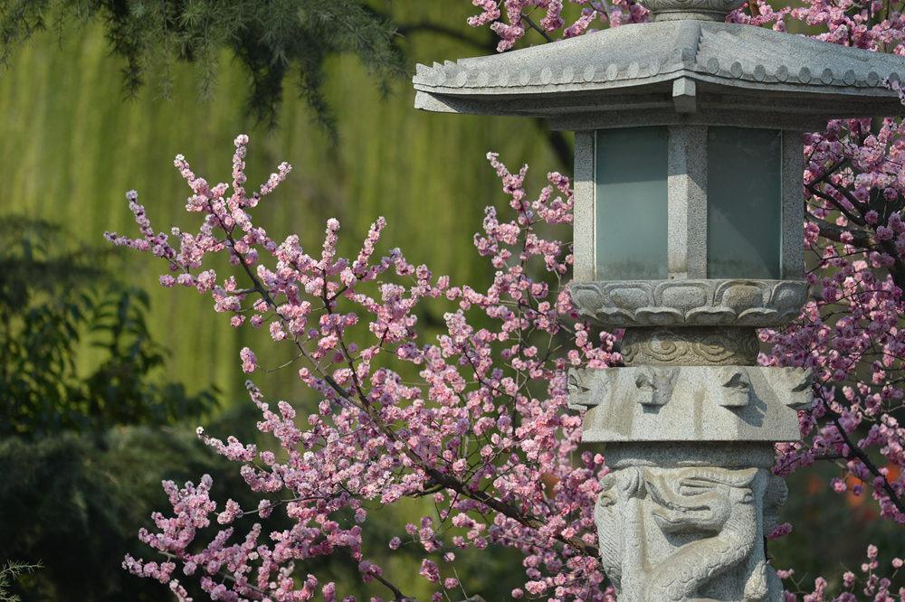 春雨后的公园_图1-1
