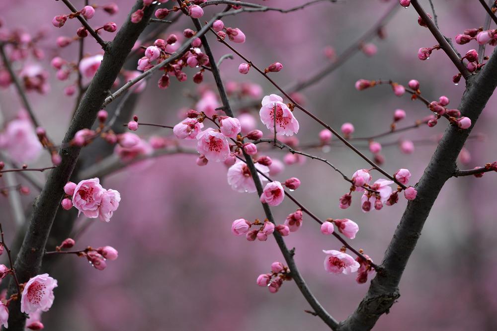 春雨后的公园_图1-2