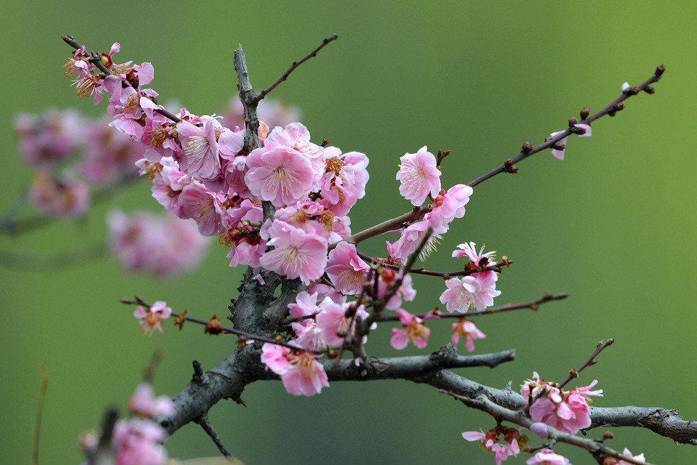 春雨后的公园_图1-4
