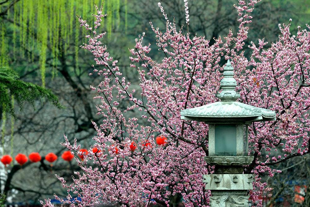 春雨后的公园_图1-6
