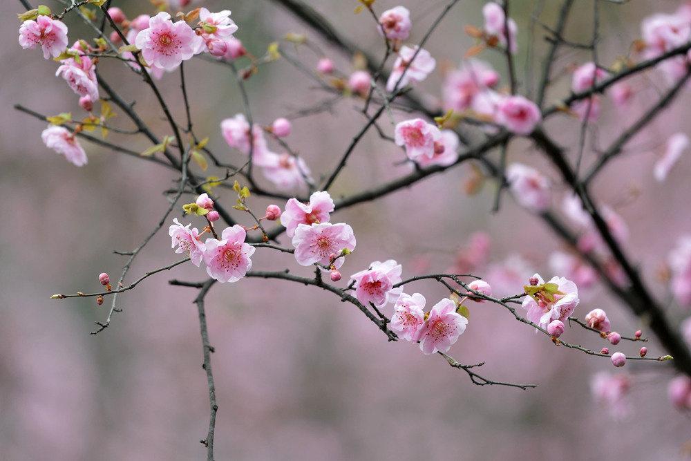 春雨后的公园_图1-7