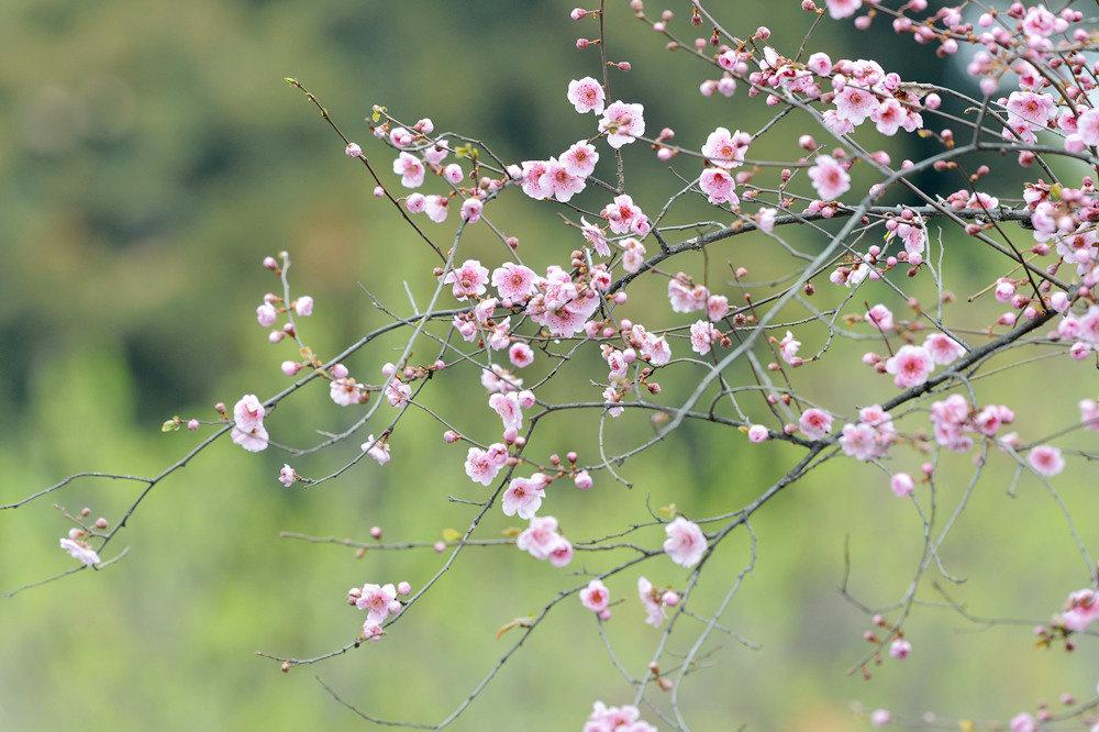 春雨后的公园_图1-8