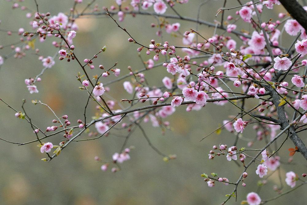 春雨后的公园_图1-9