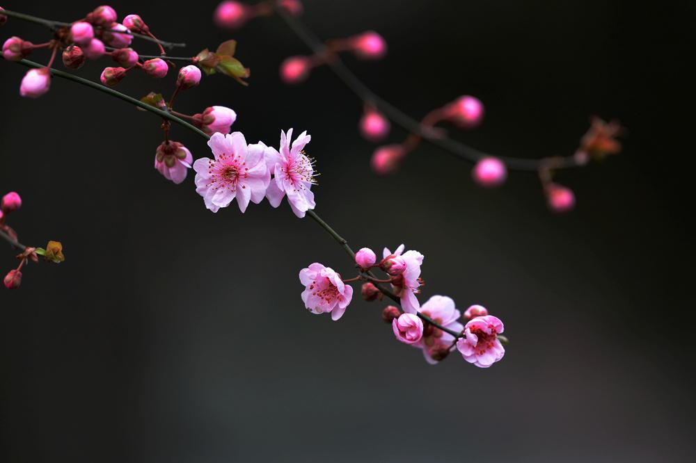 春雨后的公园_图1-10