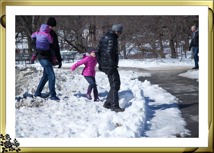 暴风雪后的中央公园,成为冰雪世界(2017-3-17)_图1-14