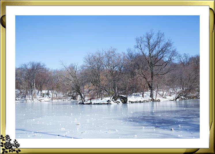暴风雪后的中央公园,成为冰雪世界(2017-3-17)_图1-18
