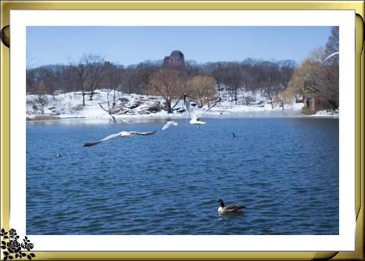 暴风雪后的中央公园,成为冰雪世界(2017-3-17)_图1-24
