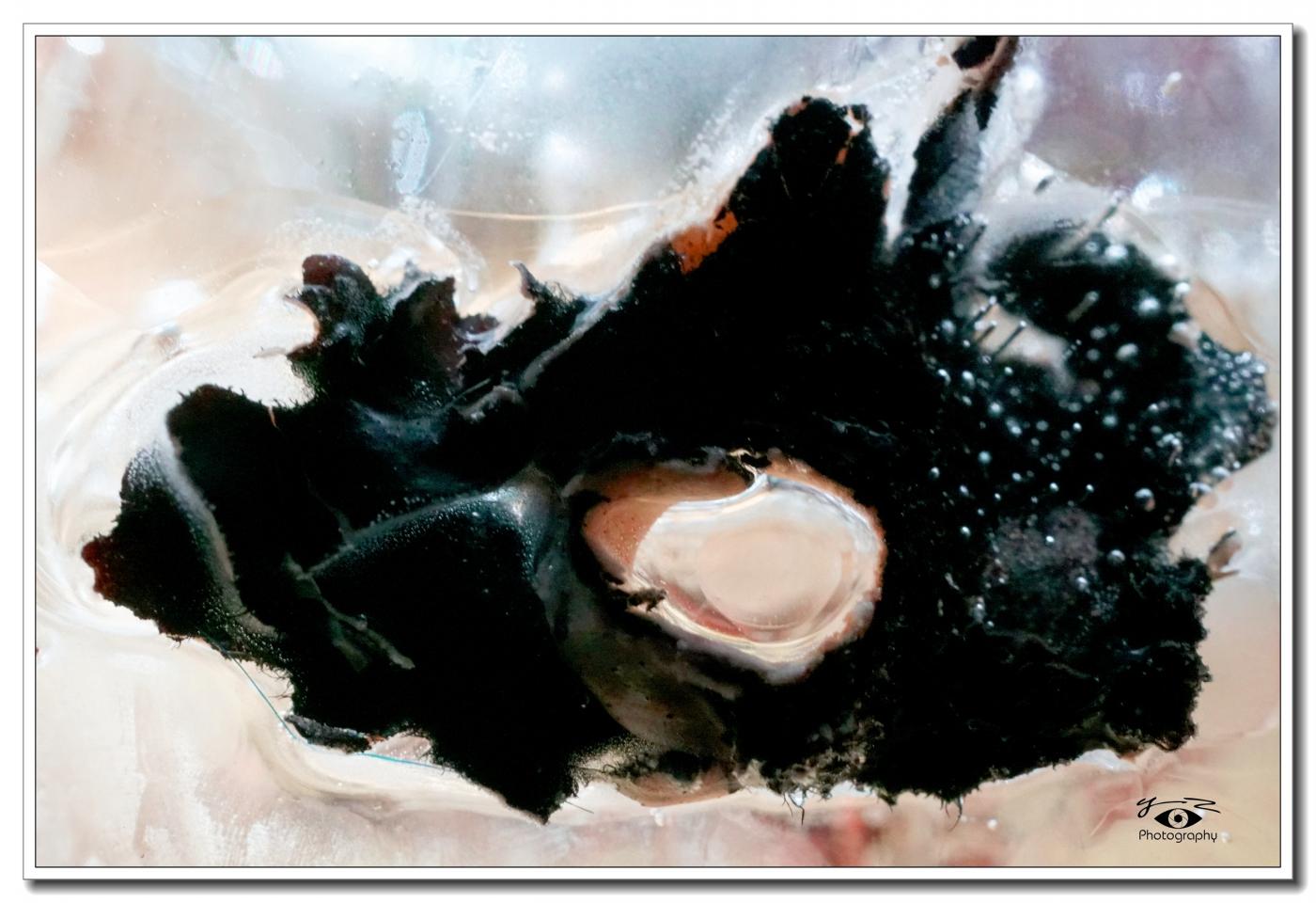 【相机人生】抽象冰画(494)_图1-11