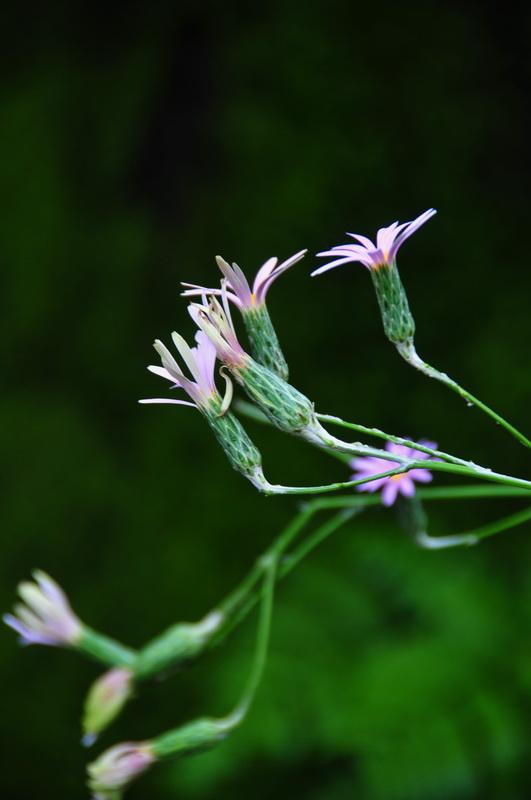 【老谢凭栏】纽约bronx植物园  泰国兰花展_图1-10