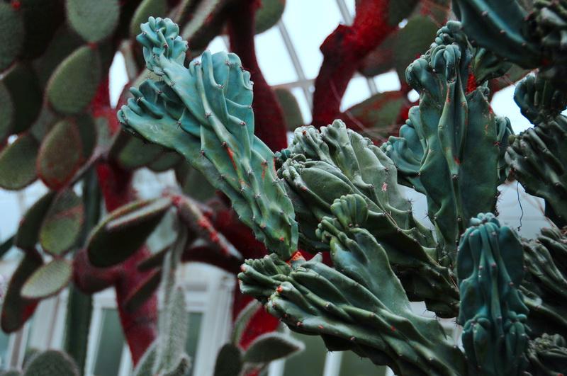 【老谢凭栏】纽约bronx植物园  泰国兰花展_图1-14