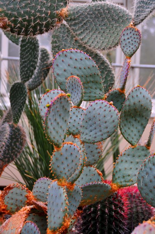 【老谢凭栏】纽约bronx植物园  泰国兰花展_图1-13