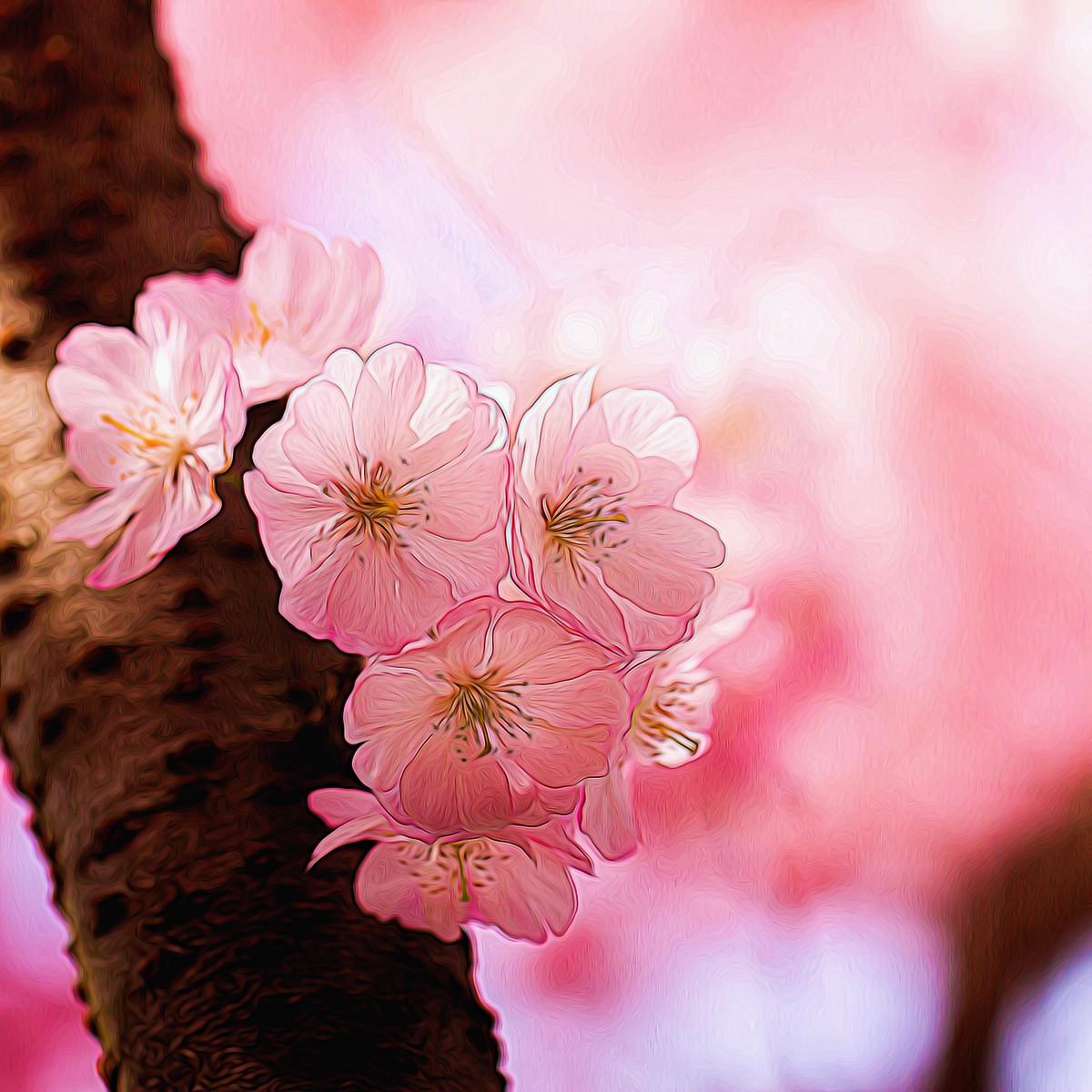 迎候春天_图1-1