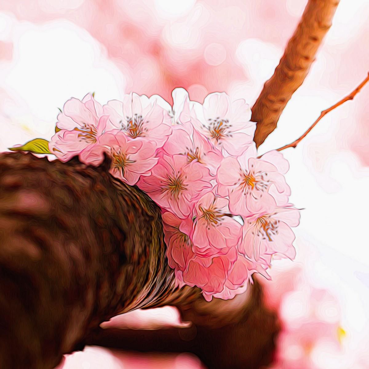 迎候春天_图1-6