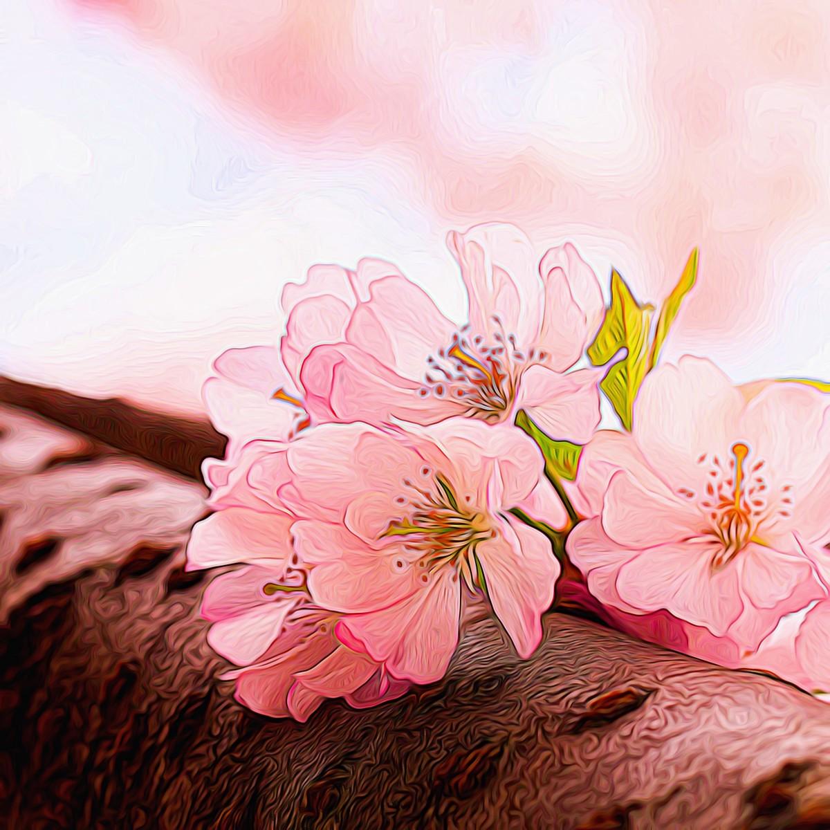 迎候春天_图1-8