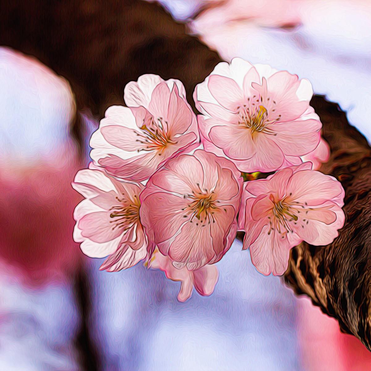 迎候春天_图1-10