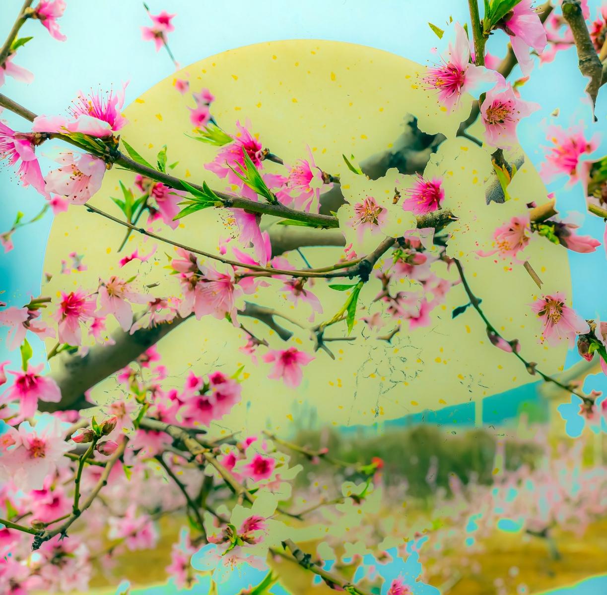 桃花摄影:花非花 画非画 花中有画 画中有花_图1-12