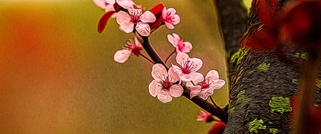 春天的呼唤_图1-1
